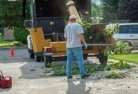 Abbotsham Tree cutting services 13