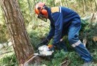 Abbotsham Tree cutting services 21